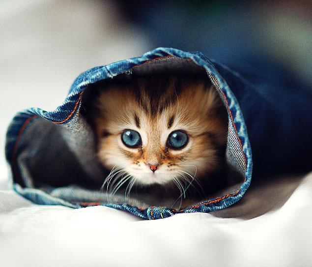 daisy-kitten-2