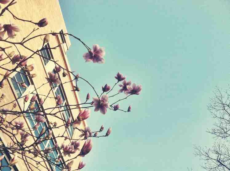 a2 spring2