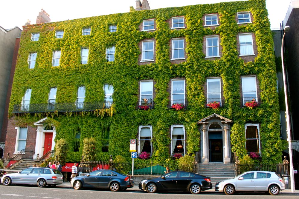 76 - Ivy-covered building, Dublin