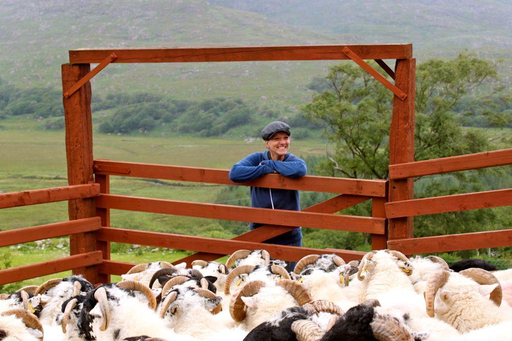 668 - Kissane Sheep Farm