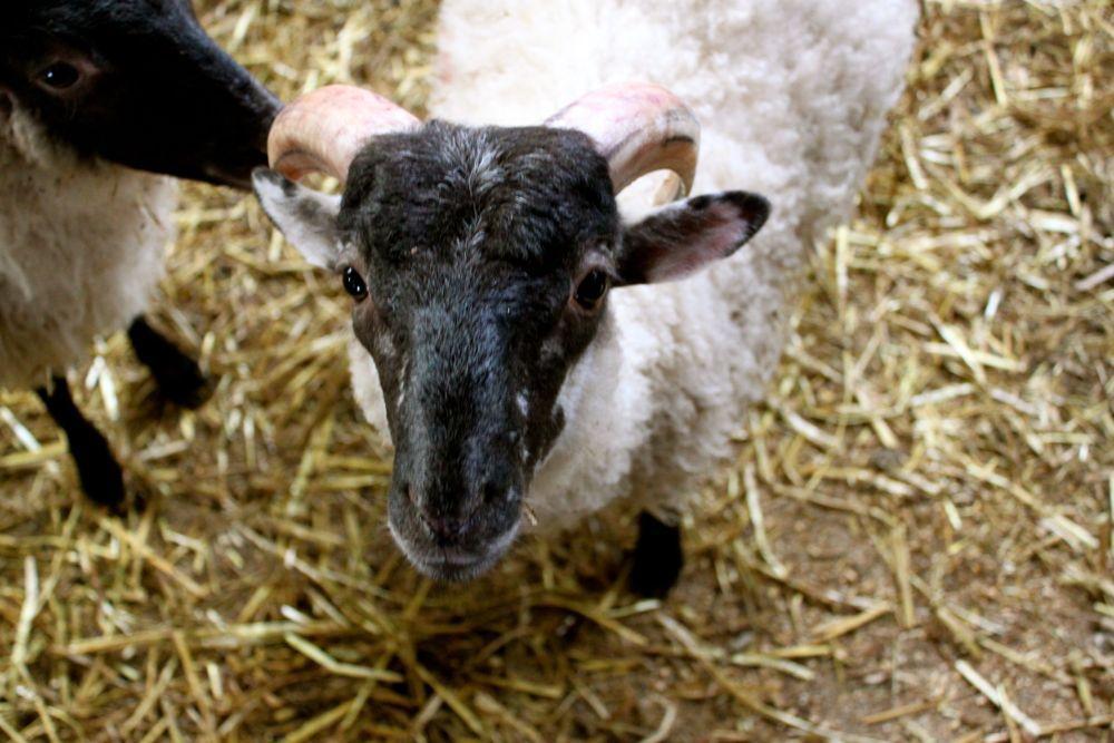 686 - Kissane Sheep Farm