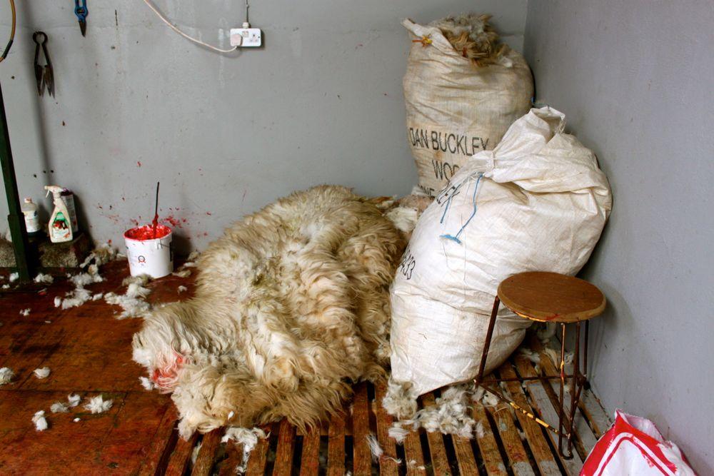 692 -Kissane Sheep Farm