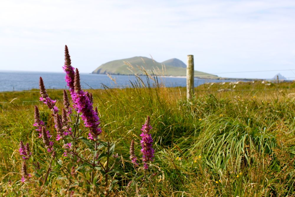 771 -Great Blasket Center