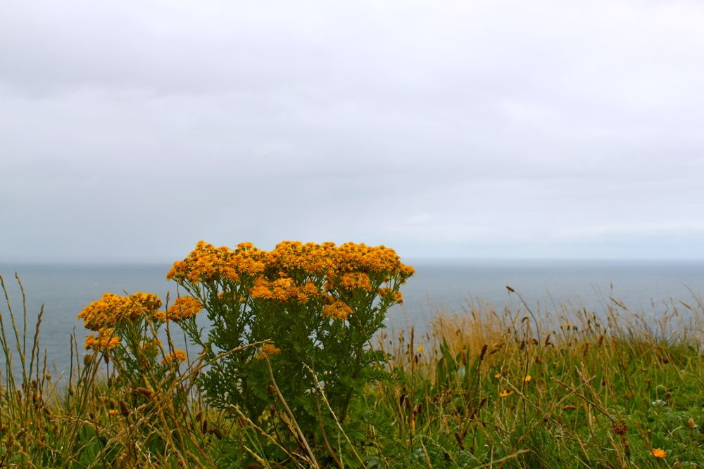 870 - Cliffs of Moher