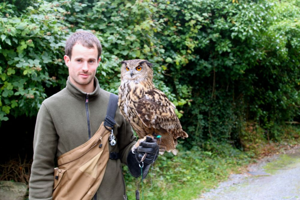 1034 - School of Falconry at Ashford Castle