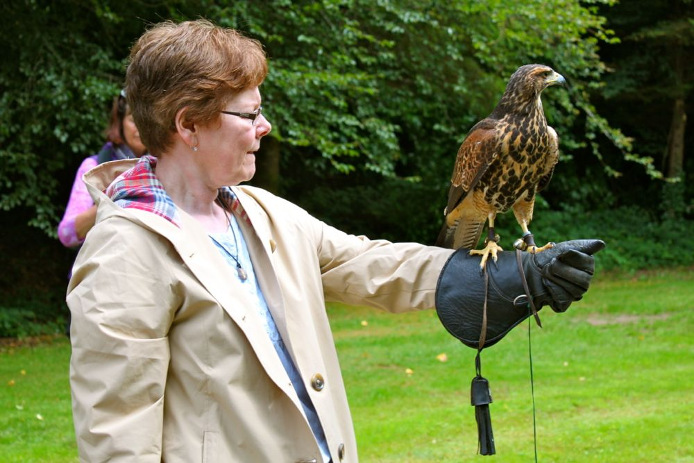 1044 - School of Falconry at Ashford Castle