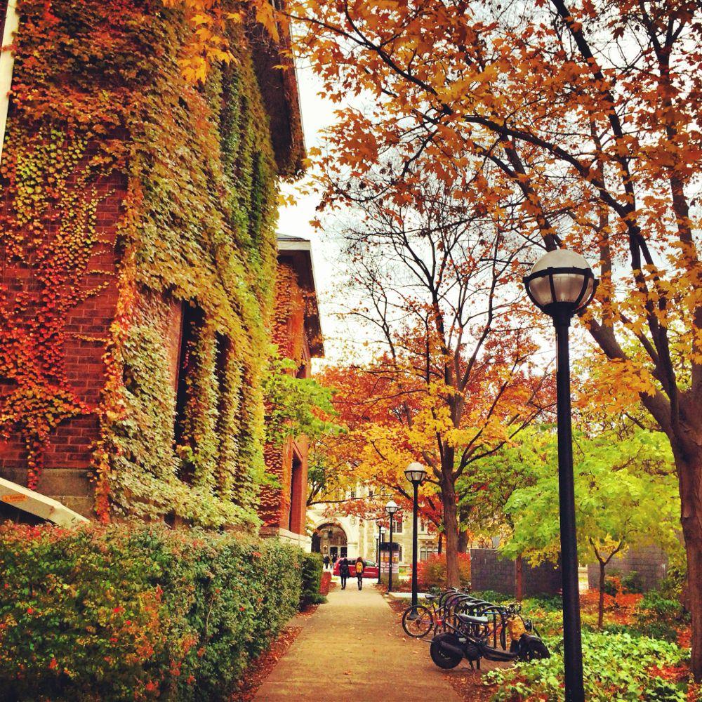 a2 autumn2