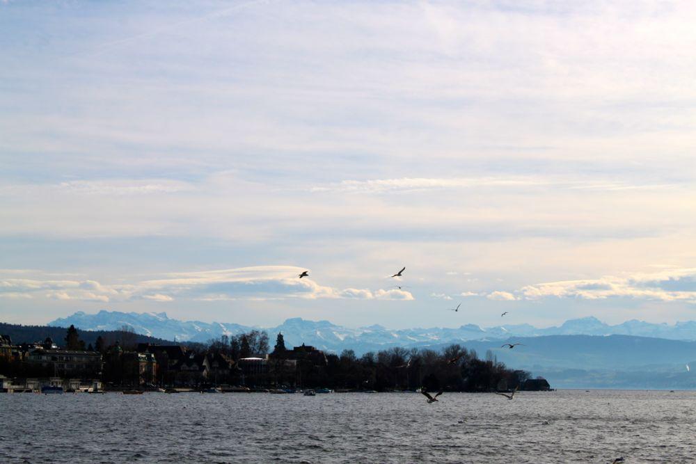 Zurich8