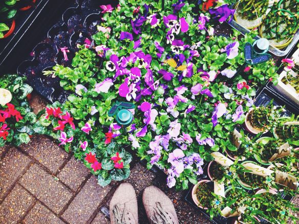 Amsterdam - The Floating Flower Market