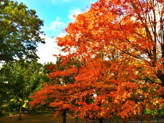 Central Park7