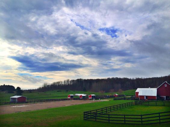 black star farms4