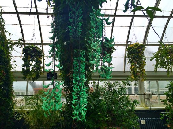 NYBG Orchid Show13