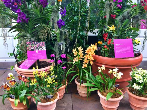 NYBG Orchid Show14