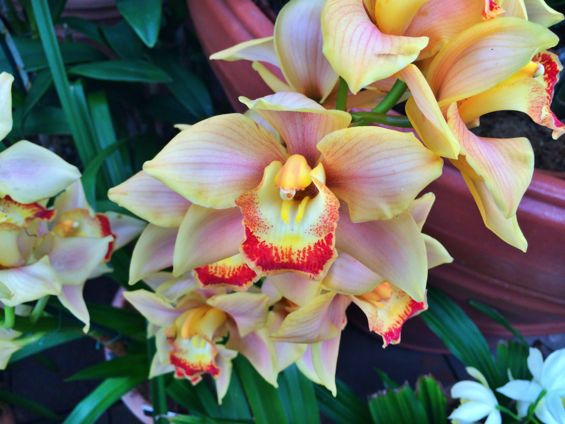NYBG Orchid Show15