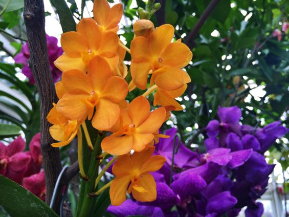 NYBG Orchid Show16