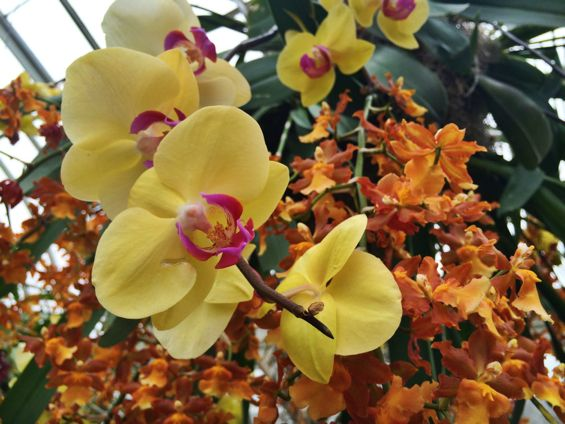 NYBG Orchid Show21