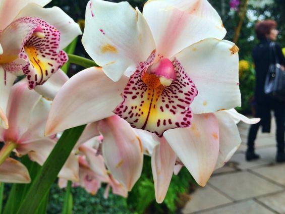 NYBG Orchid Show23
