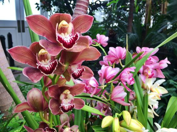 NYBG Orchid Show25