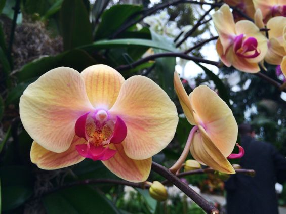 NYBG Orchid Show26