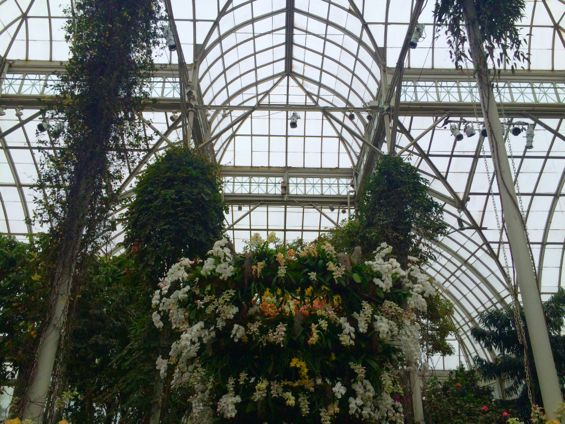 NYBG Orchid Show27