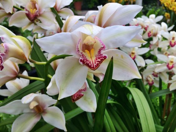 NYBG Orchid Show29