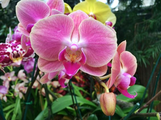 NYBG Orchid Show30