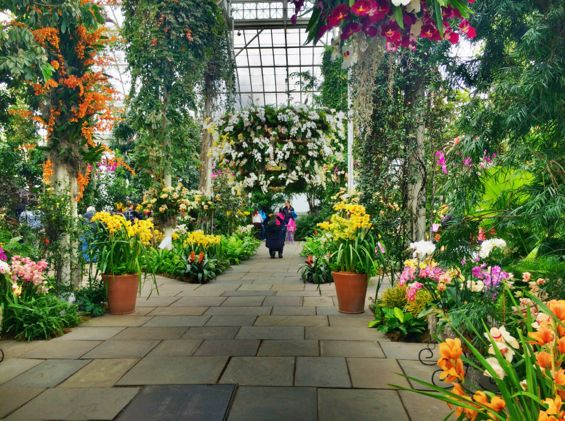 NYBG Orchid Show33