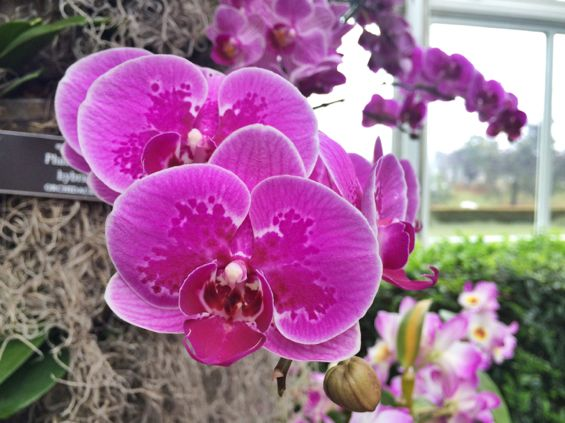 NYBG Orchid Show34