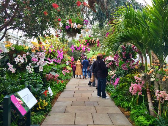 NYBG Orchid Show35