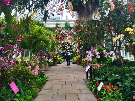 NYBG Orchid Show37