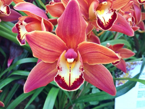 NYBG Orchid Show38