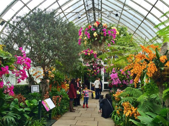 NYBG Orchid Show39