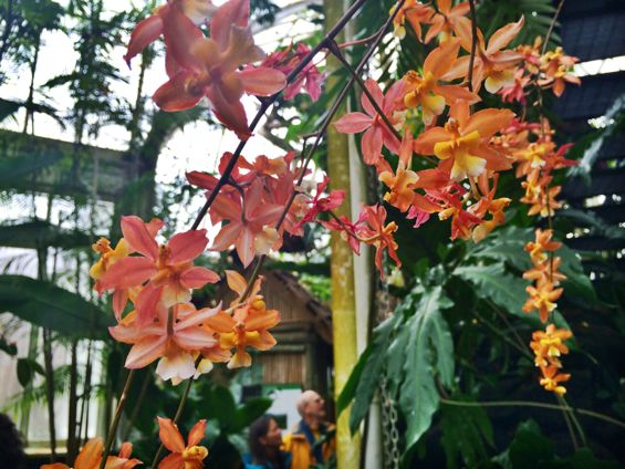 NYBG Orchid Show4