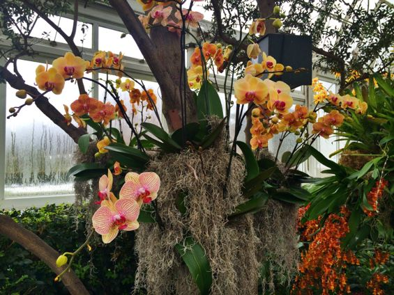NYBG Orchid Show40