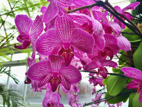NYBG Orchid Show41