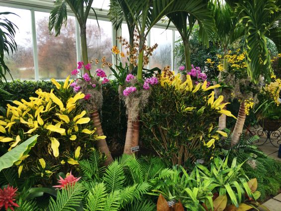 NYBG Orchid Show43
