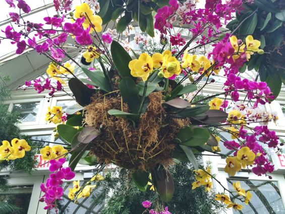 NYBG Orchid Show46