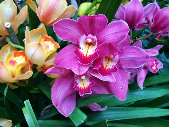 NYBG Orchid Show47