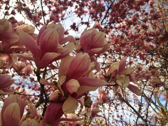 Central Park Springtime10