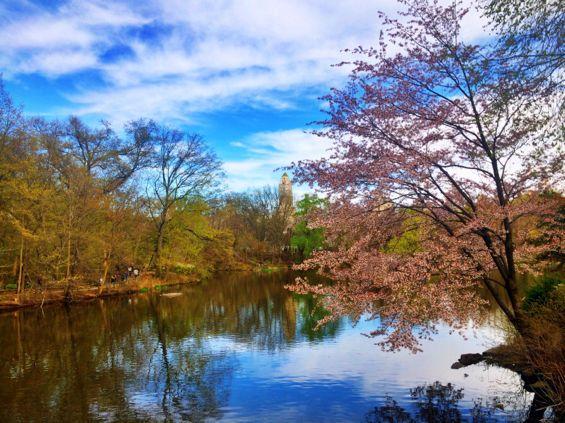 Central Park Springtime2