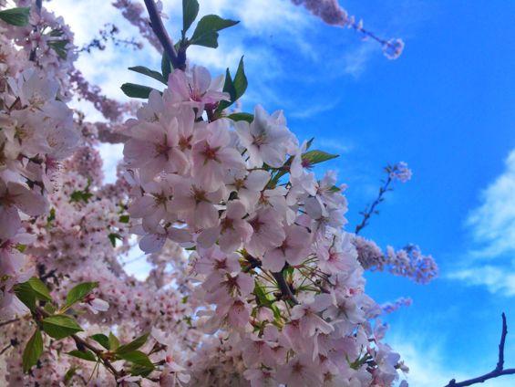 Central Park Springtime3