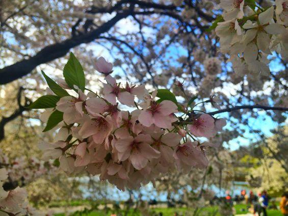 Central Park Springtime4