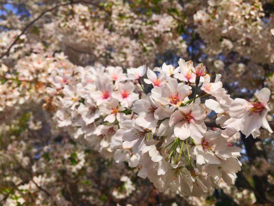 Central Park Springtime5