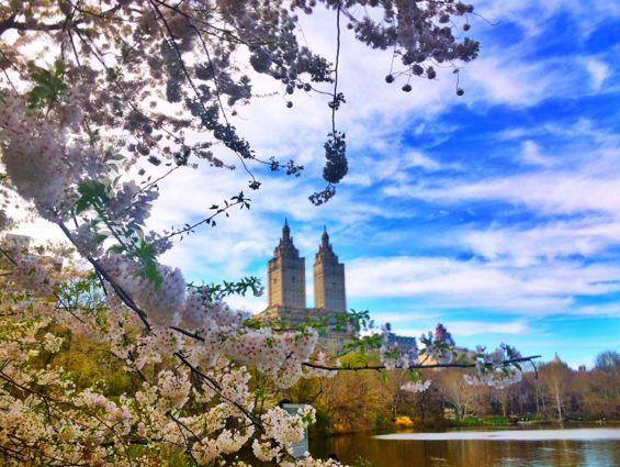 Central Park Springtime6
