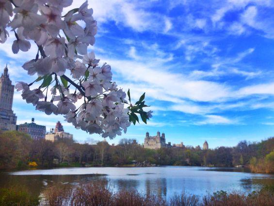 Central Park Springtime7
