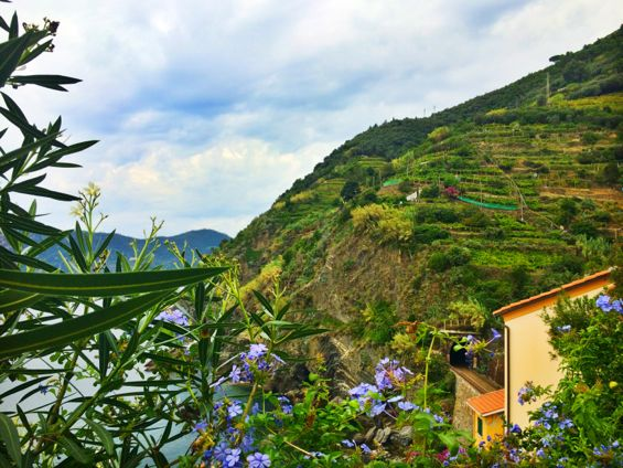 Vernazza Hike6