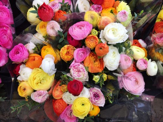 Oslo - Flower Market