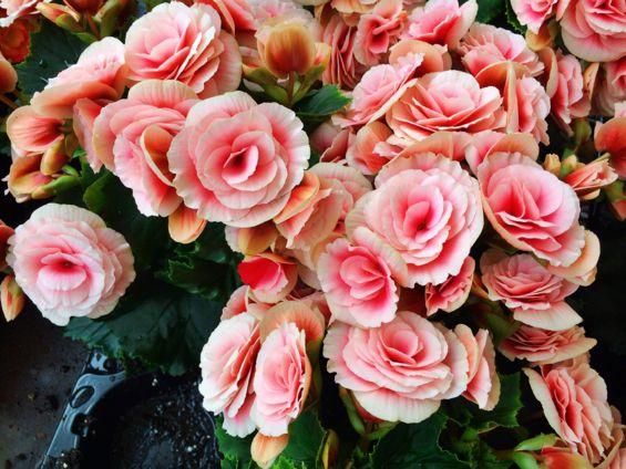 Oslo - Flower Market3