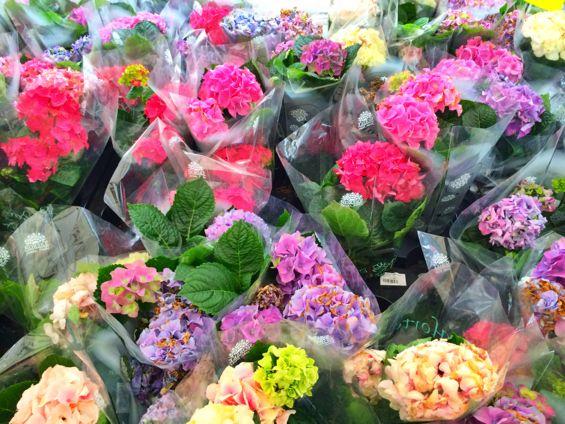 Oslo - Flower Market4