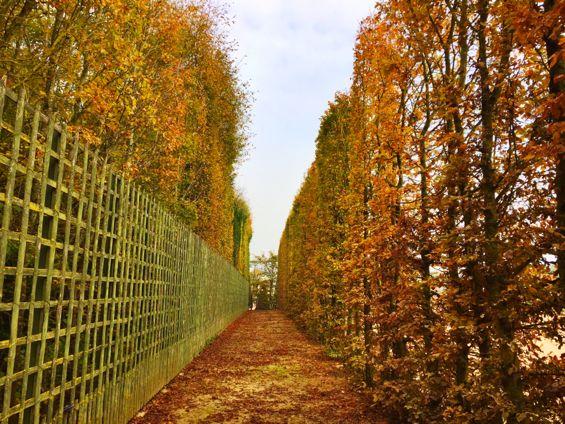Versailles Gardens19